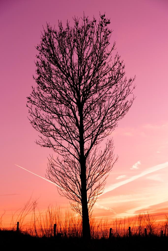 Ombre d'un arbre devant un couché de soleil par Stéphane Thirion Virton